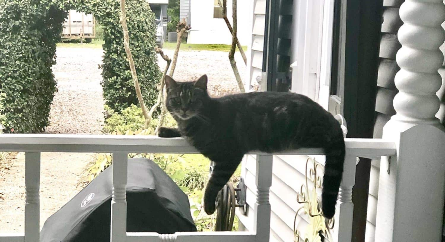 Pretty kitty sitting on the ledge of the porch railing